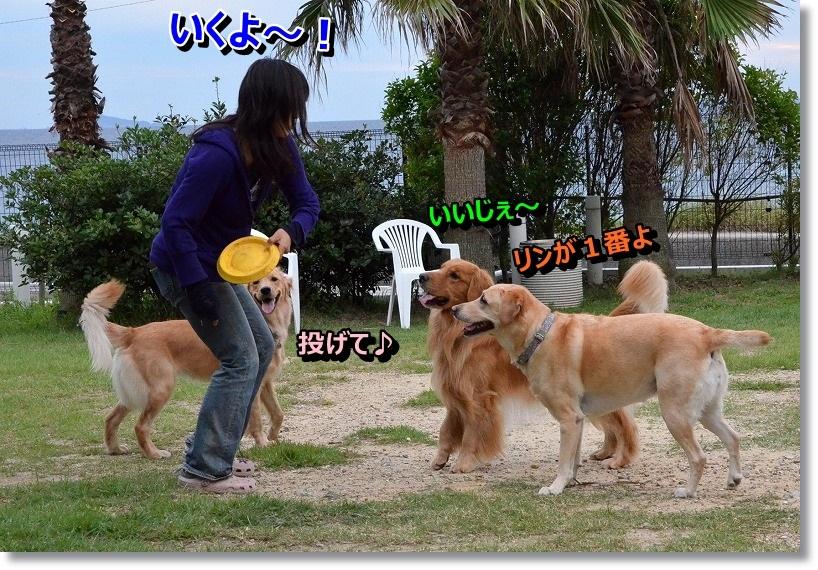 DSC_1229_201410071947305d9.jpg