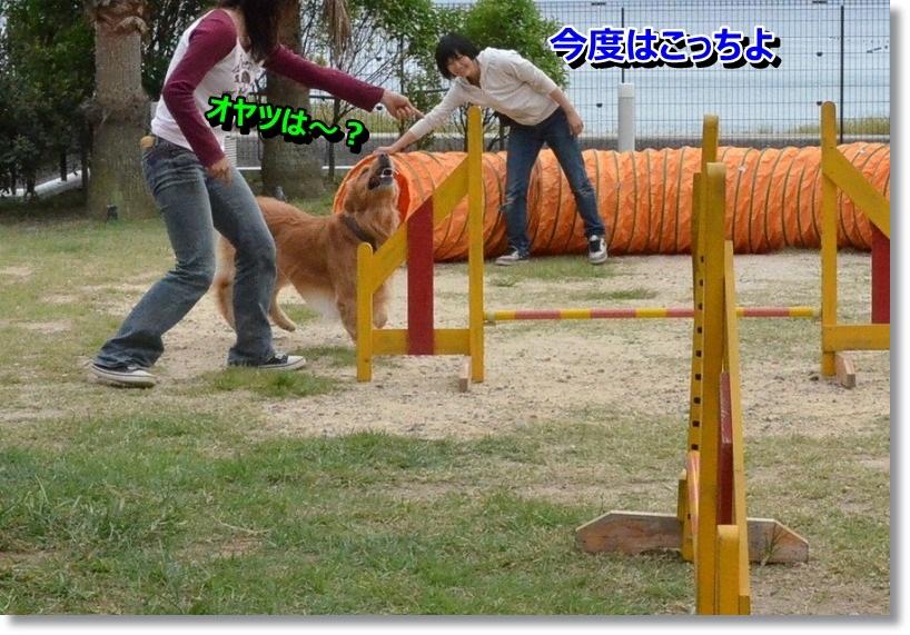 DSC_1688_20141011005512be4.jpg