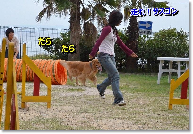 DSC_1949_201410111936213d6.jpg
