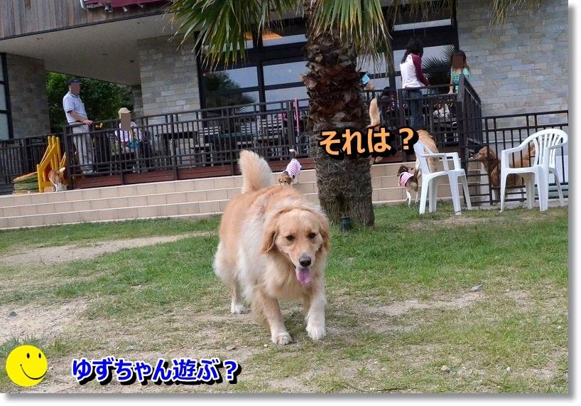 DSC_1974_201410111936449bd.jpg