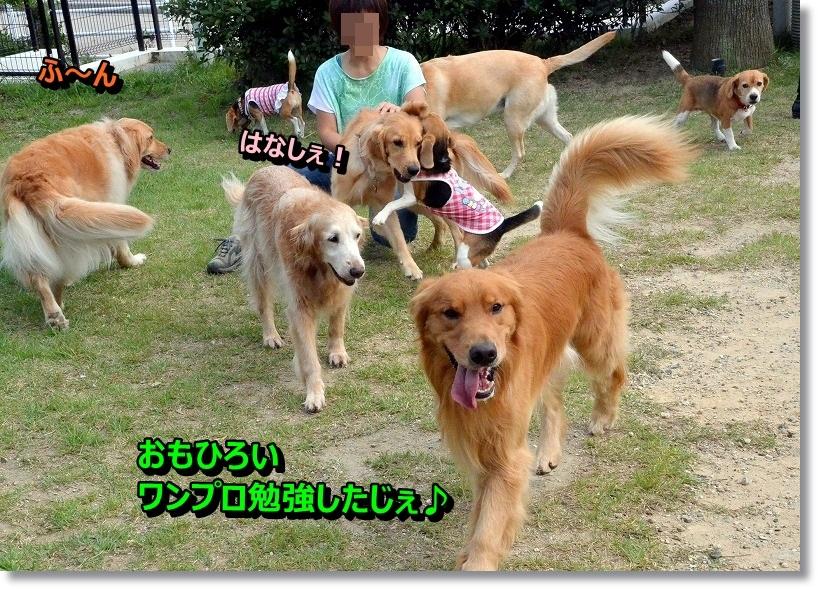 DSC_2003_2014101119375954f.jpg