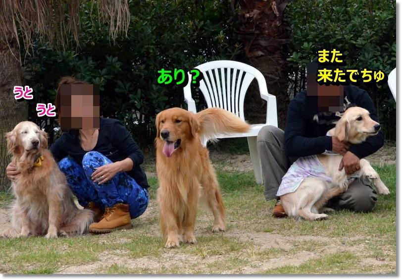 DSC_2226_20140921104834ee7.jpg