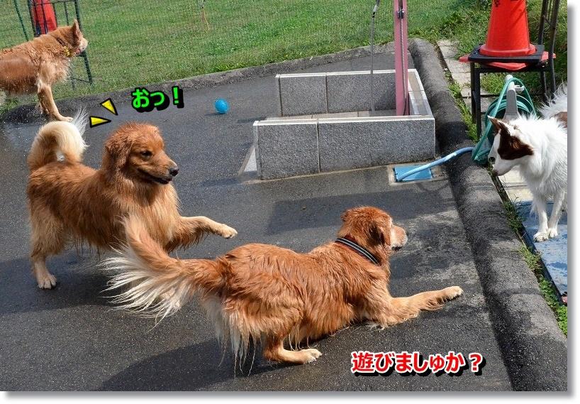 DSC_3544_201410141953452ce.jpg