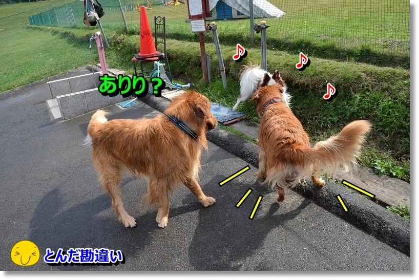 DSC_3552_20141014195401906.jpg