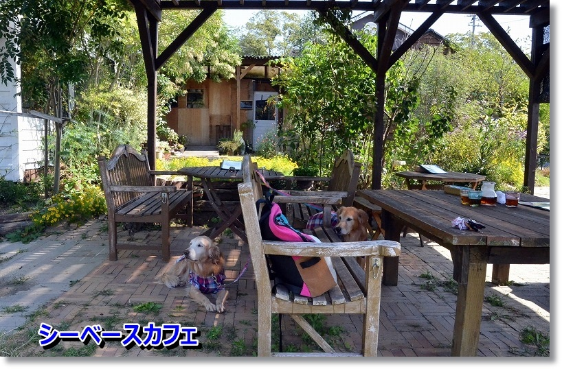 DSC_4705_201410200850410a3.jpg