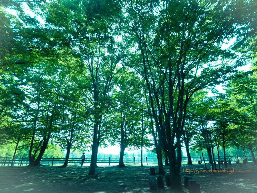 軽井沢の朝