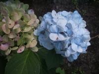 2014-08-27FUJI-052.jpg