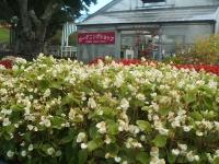 2014-09-21薔薇-043