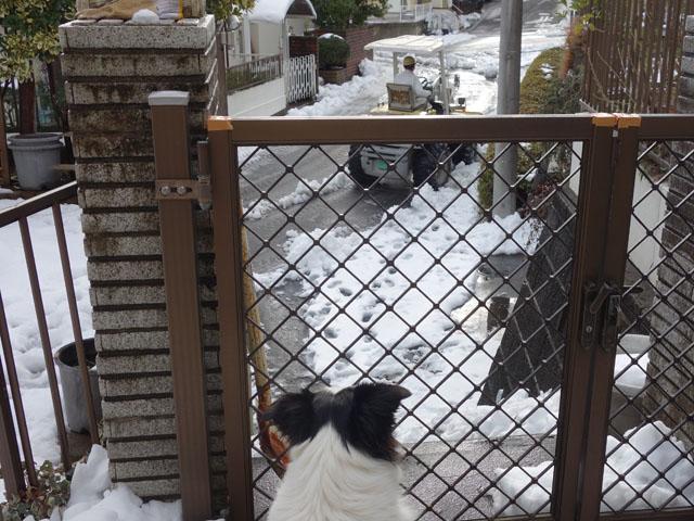 ブルドーザーで雪かき
