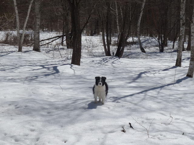 雪の上で遊ぶのはうれしい