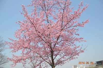 20140324_梅小路公園-001