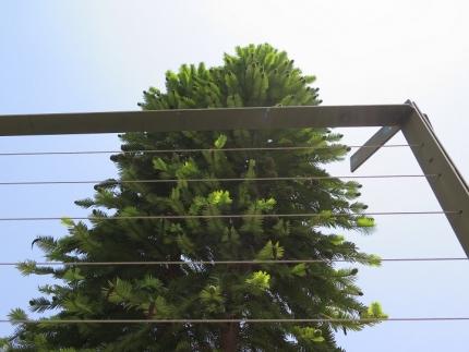 浜名湖花博ジュラシックツリー