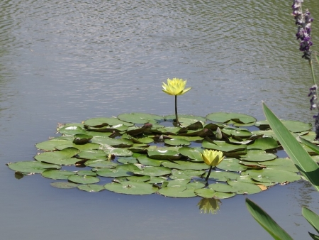 浜名湖花博