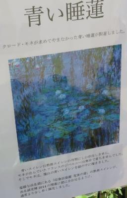 浜名湖花博 青い睡蓮