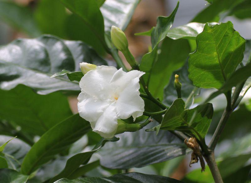 サンユウカ2011・6・6A_86