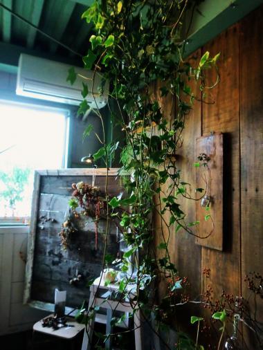 9.20 植物展2