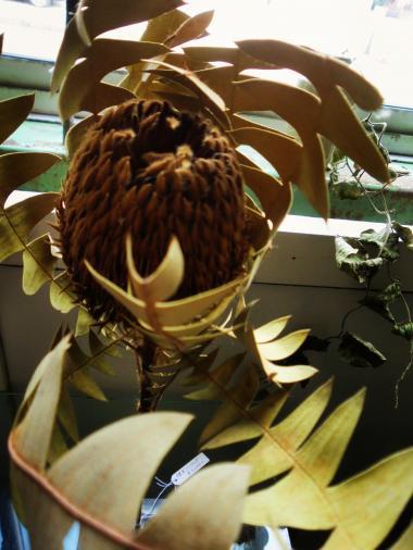 9.20 植物展3