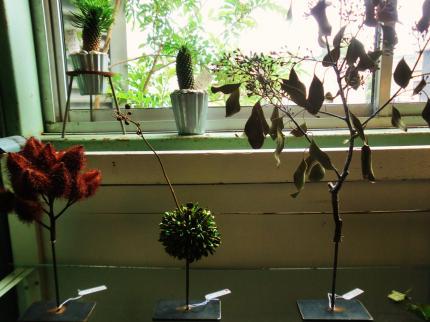 9.20 植物展5
