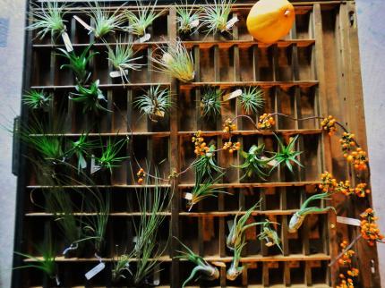 9.20 植物展4