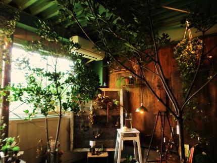 9.20 植物展14