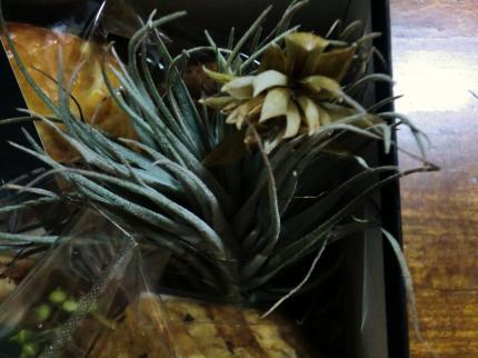 植物展・nokos4