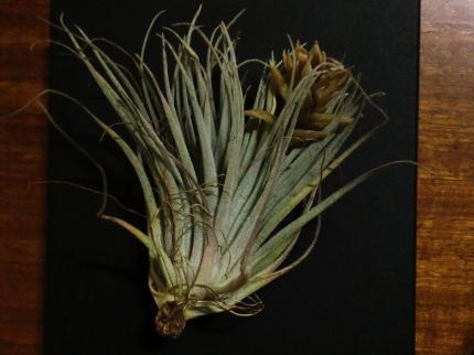 植物展・nokos6