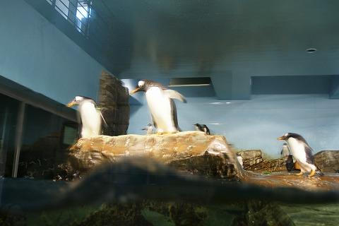 ペンギンDSC03931