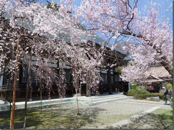 2014-4-15光林寺 (5)
