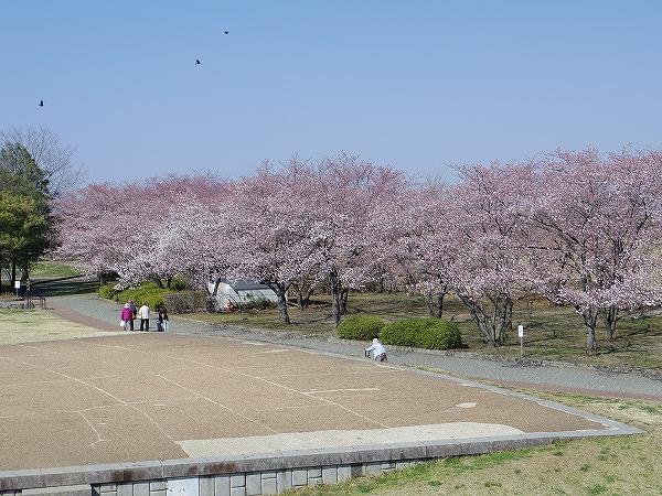 2014-4-14古戦場 (1)