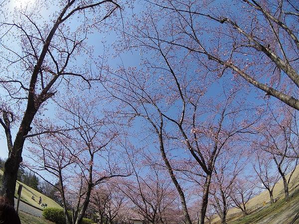 2014-4-14古戦場 (3)