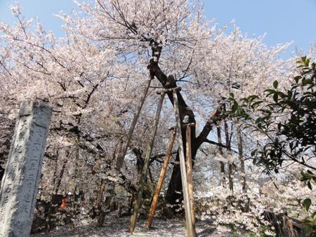 isido-kabazakura3876swb.jpg