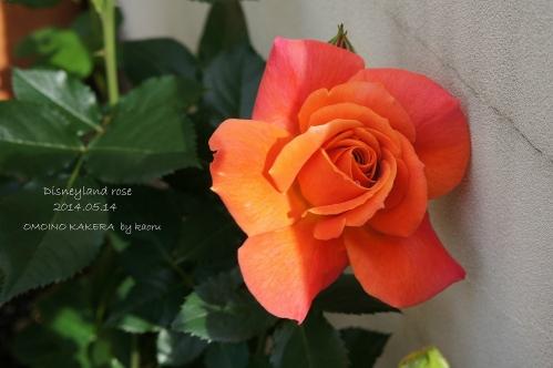 今年最初の花