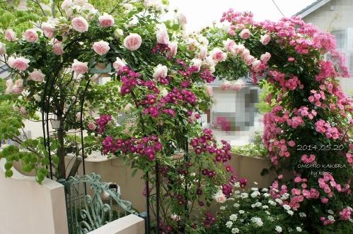 庭からの眺め2