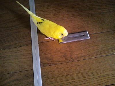 床下収納!