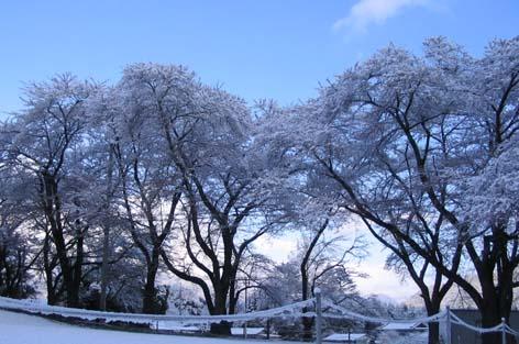 H260406雪景色