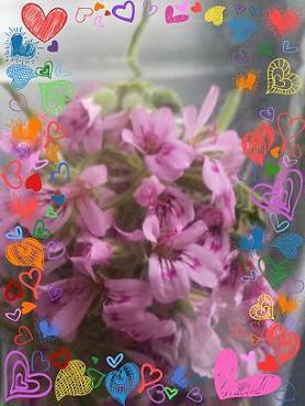PicsArt_1399853751290.jpg