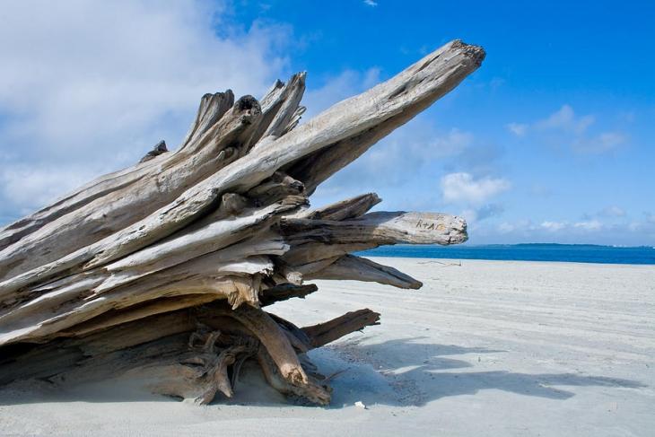 tybee-island-driftwood-eric-gordon.jpg