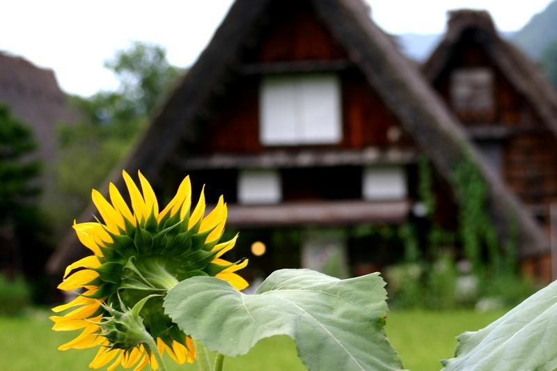 紅葉には少し早いけど、9月は2回の連休がありますね(#^.^#) 温泉につかって、白川郷の秋の風景を眺めながらのんびり♪ ②