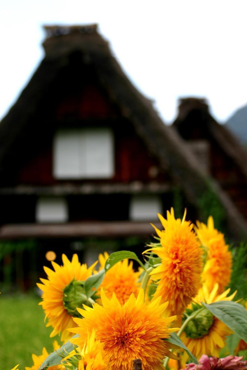 紅葉には少し早いけど、9月は2回の連休がありますね(#^.^#) 温泉につかって、白川郷の秋の風景を眺めながらのんびり♪ ③