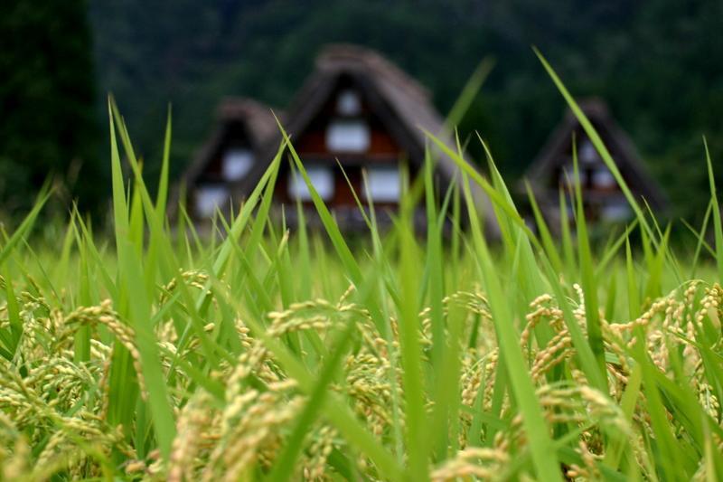 紅葉には少し早いけど、9月は2回の連休がありますね(#^.^#) 温泉につかって、白川郷の秋の風景を眺めながらのんびり♪ ⑥