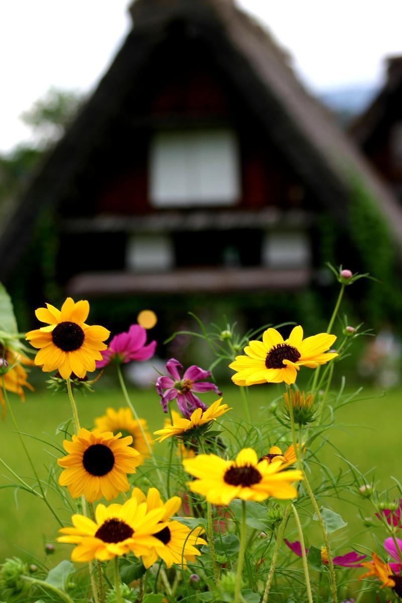 初めて来られる方も二度、三度目という方も、初秋の風が心地良い 9月の連休にぜひ世界遺産 白川郷に観光へ ⑦