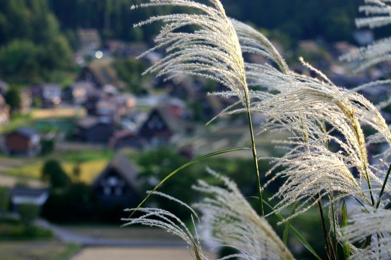 夏の繁忙期を経て初秋を過ぎると、いつもの静かな日常が戻る世界遺産 白川郷…実は ⑥