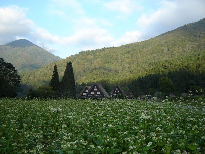 秋旅行を満喫♪これから白川郷の麓~紅葉狩りを楽しんで後は温泉で湯ったり~  ⑦