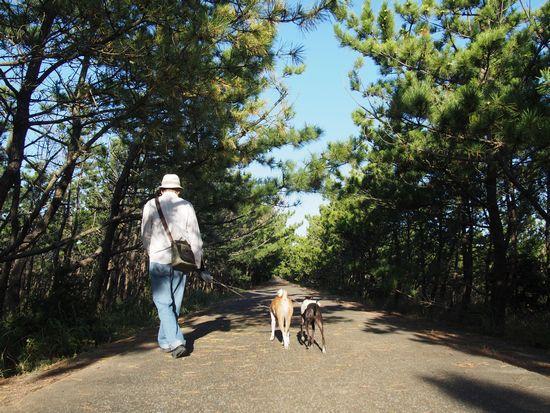 松林散歩コース。