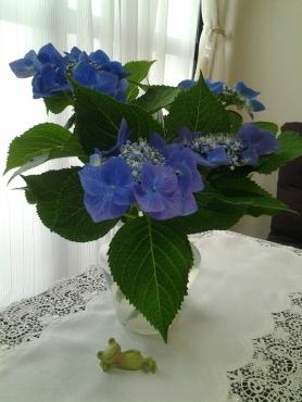 お父さんの紫陽花