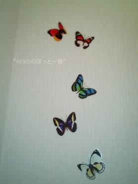 蝶々のウォールステッカー