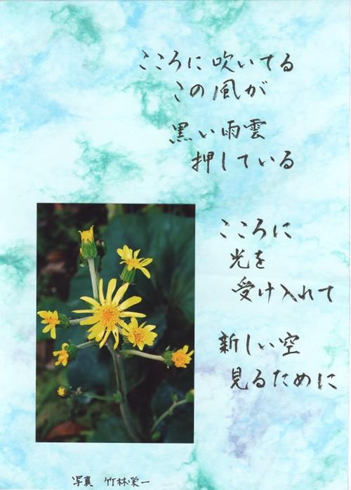 Photo_203