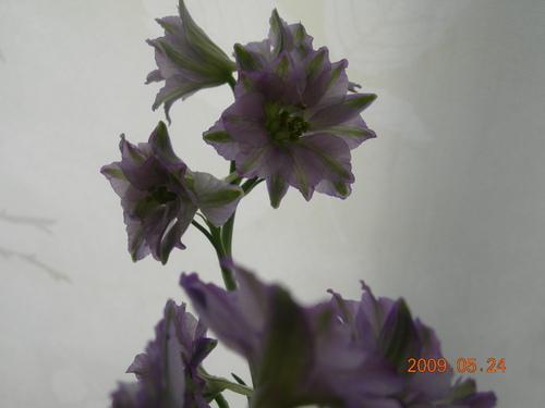 20090524_dscn6496