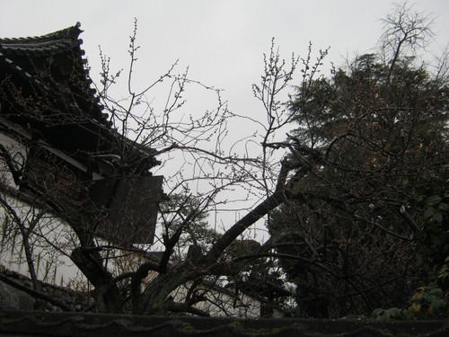 2011_241_2