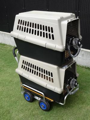 Cart-05.jpg